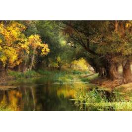 Posters Fototapeta, Tapeta Dressed In Autumn, (368 x 254 cm)